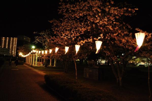 【お花見情報】佐世保公園の桜-1