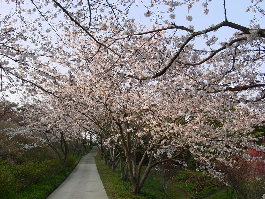 【お花見情報】花の森公園-1