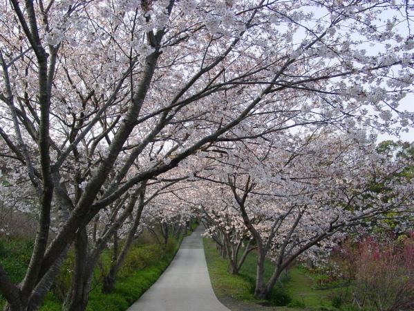 【お花見情報】花の森公園-0