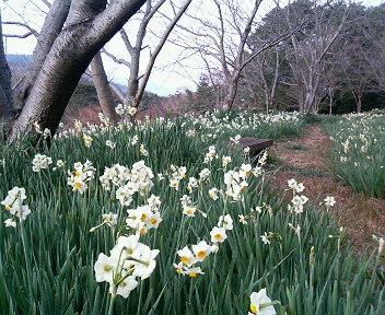 【お花見情報】花の森公園-3