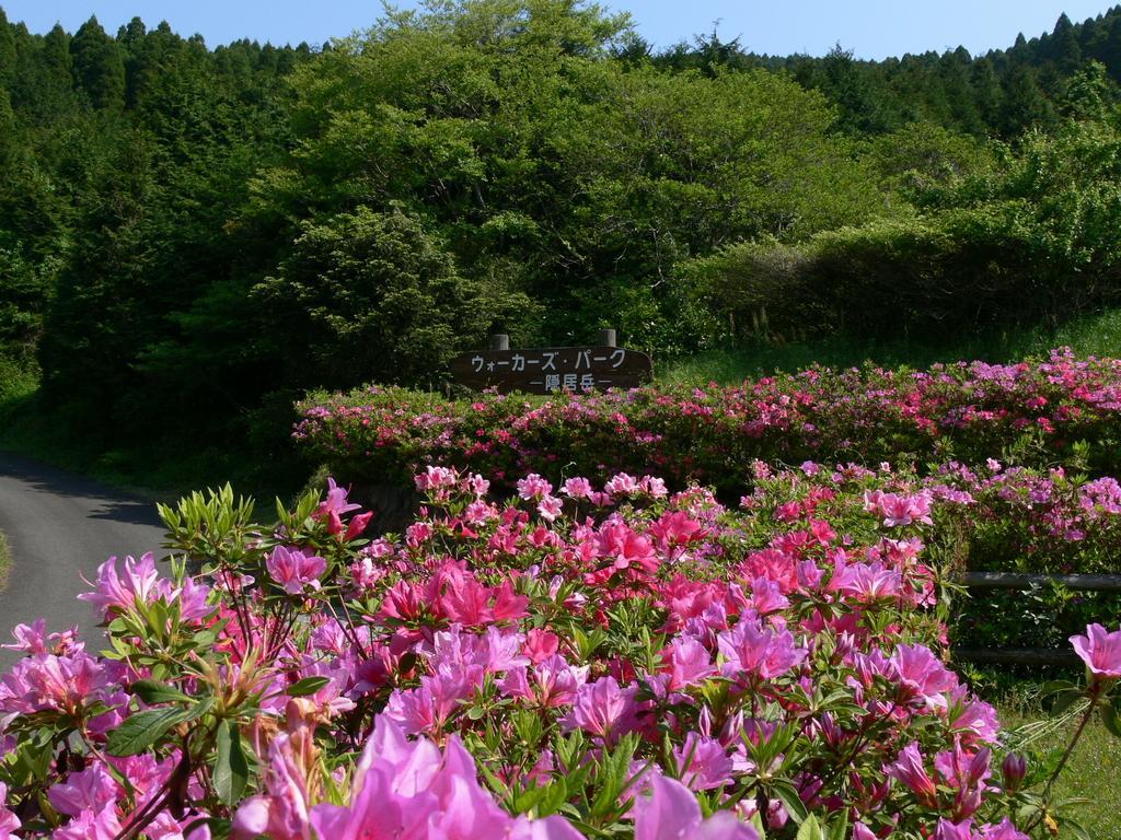 【お花見情報】隠居岳のツツジ-1