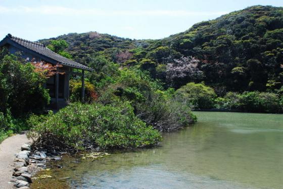 池塚のハマジンチョウ-1