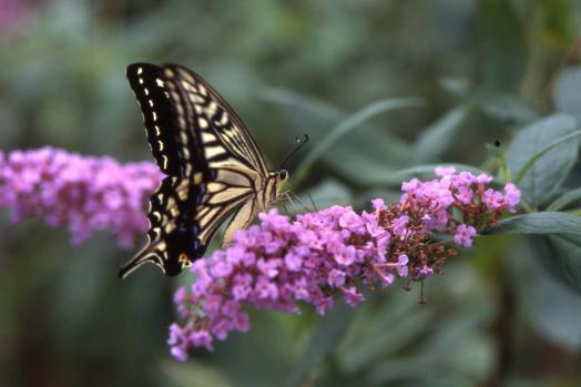 たびら昆虫自然園-0