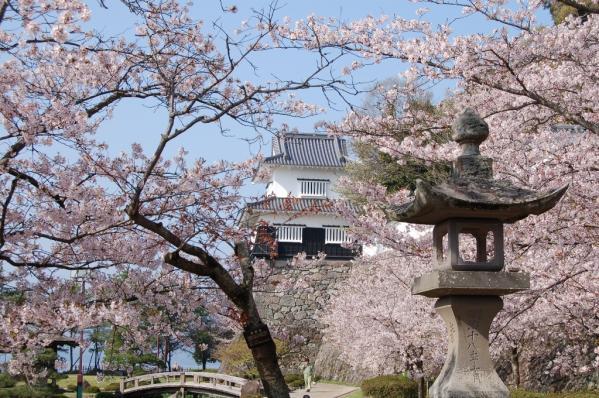 大村桜まつり-3