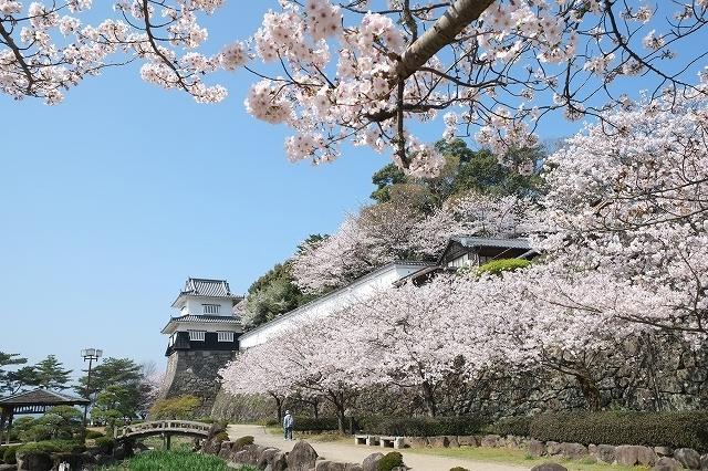 大村桜まつり-4