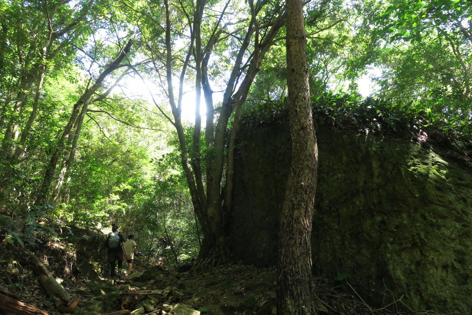 原始林トレッキング-1