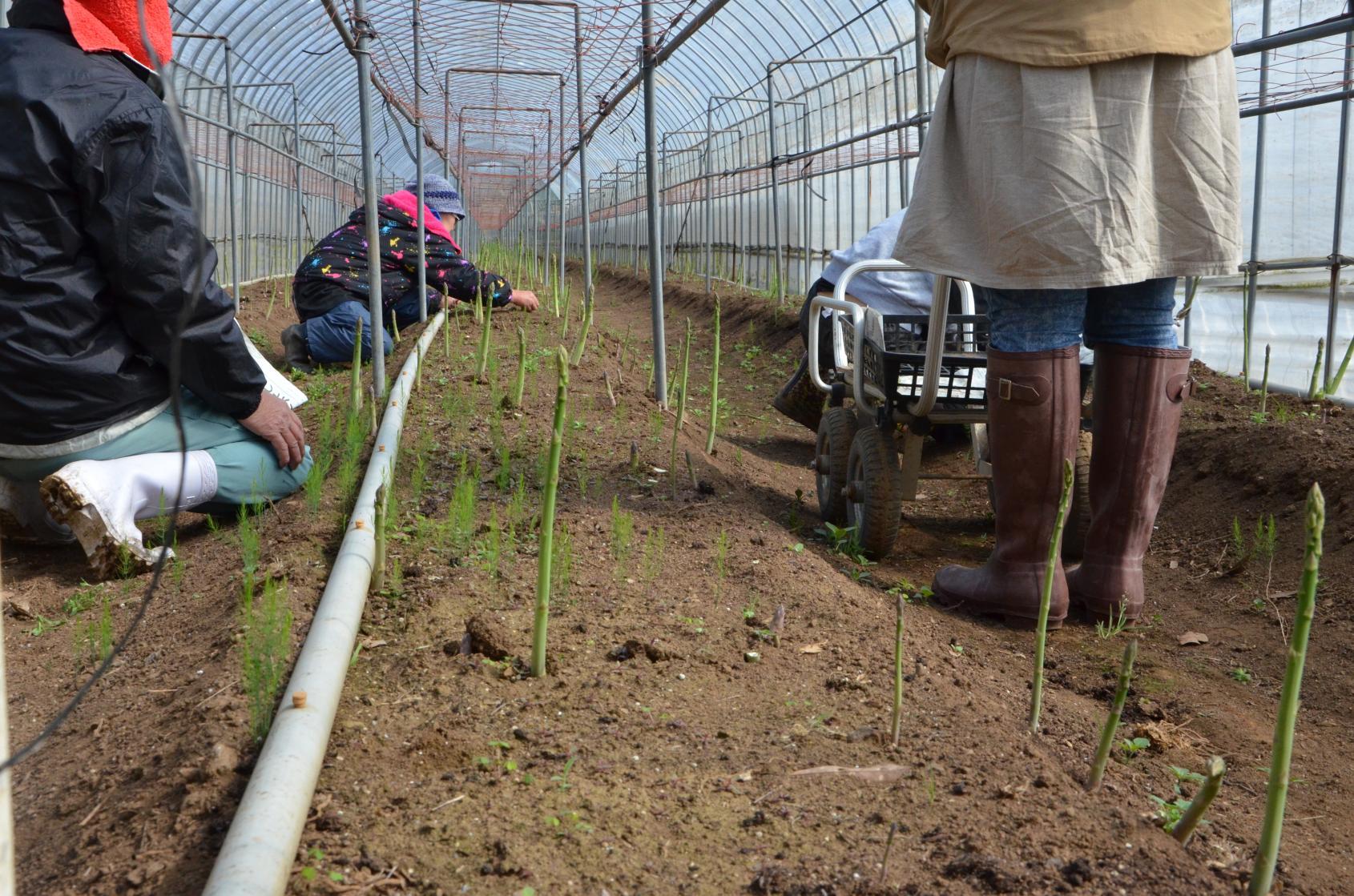 農業体験(旬野菜の収穫体験)-2