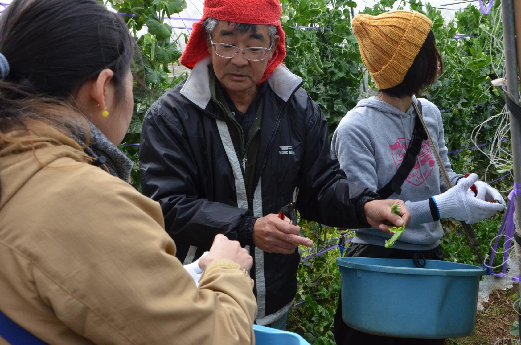 農業体験(旬野菜の収穫体験)-1