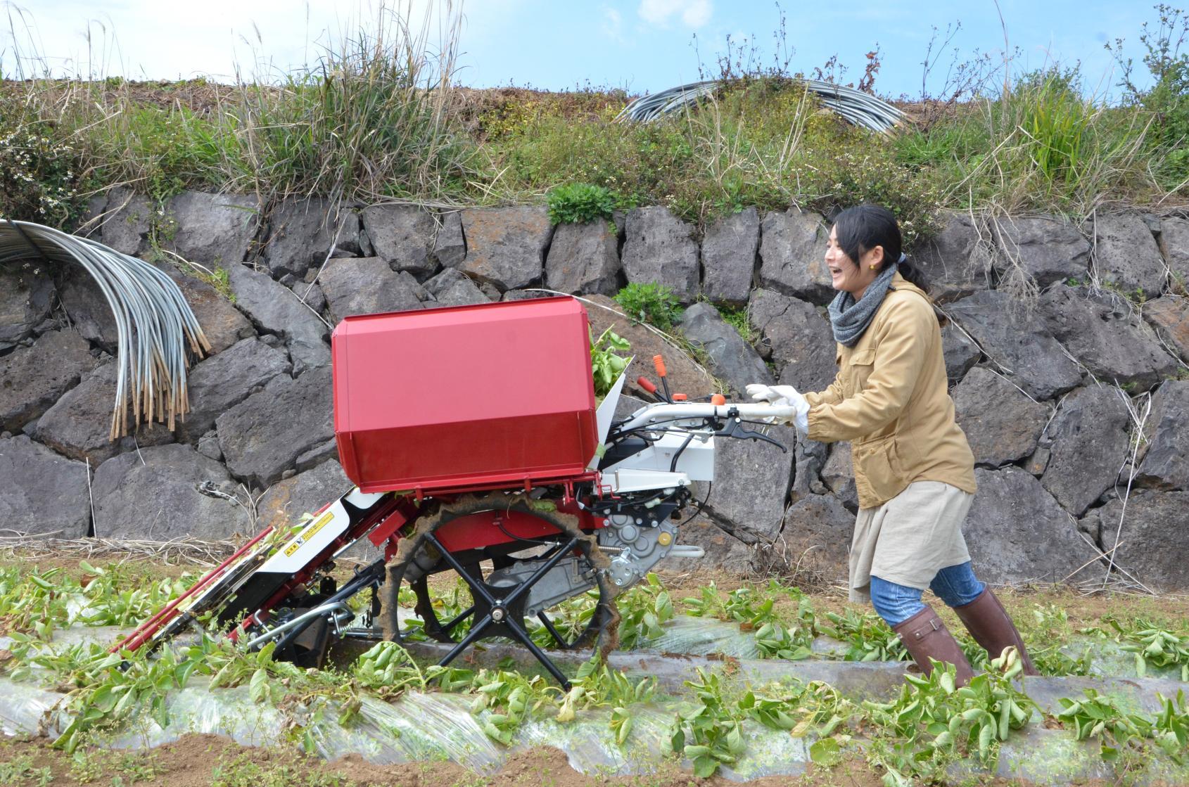 農業体験(旬野菜の収穫体験)-7