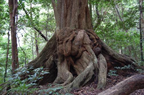 龍良山原始林-0