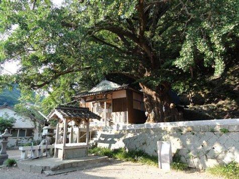 六御前神社の大銀杏(むつのごぜんじんじゃのおおいちょう)-1