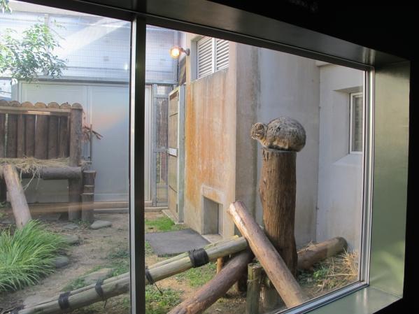 環境省 対馬野生生物保護センター-6