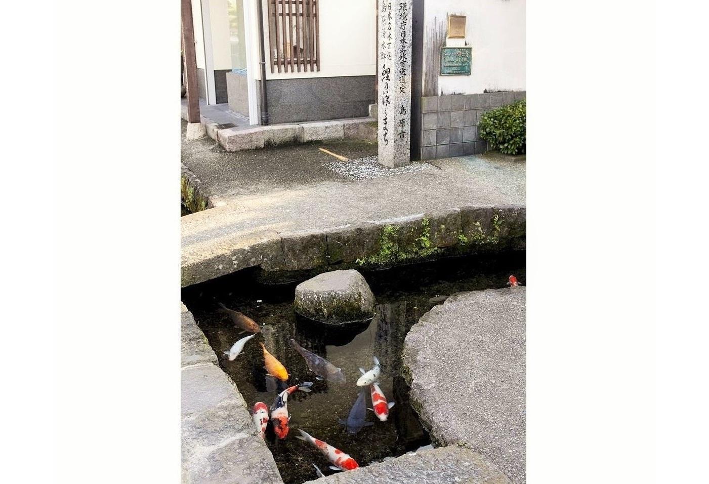 鯉魚街-2