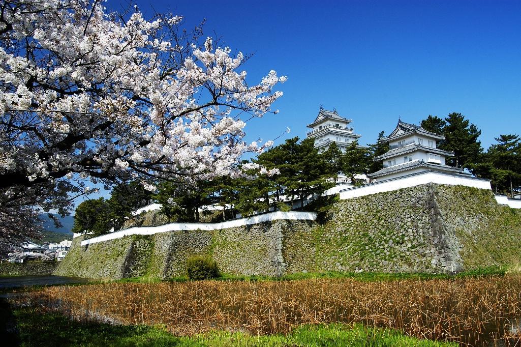 桜の名所(島原城堀端)-1
